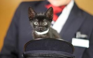 BA - cat
