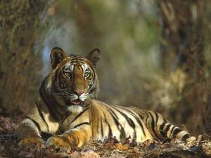 bandhavgarh-national-park-india