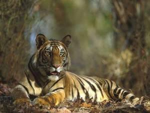 bandhavgarh-national-park-india