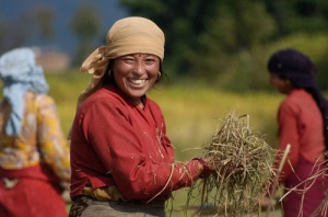 Pokhara rice picker